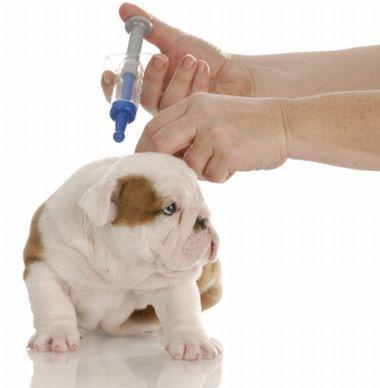 vacunar a un cachorro Calendario de vacunas para mascotas