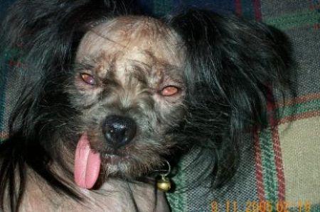 PERRO FEO 11 Las fotos de perros mas feos