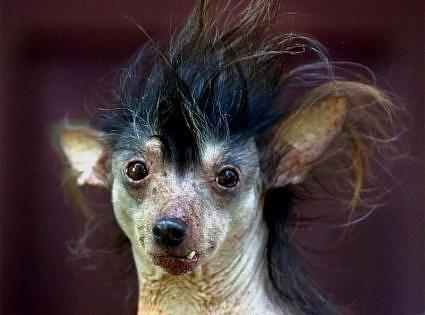 PERRO FEO 2 Las fotos de perros mas feos