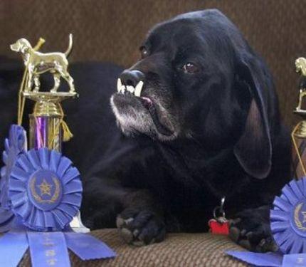PERRO FEO 4 Las fotos de perros mas feos