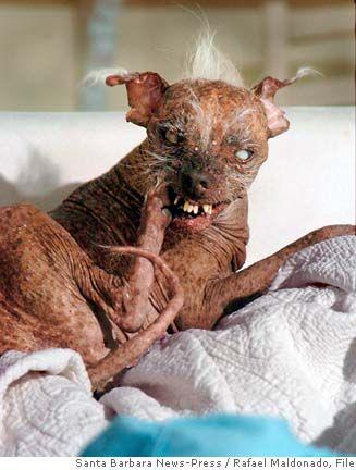 PERRO FEO 5 Las fotos de perros mas feos
