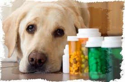 Que efectos produce la amoxilina en los perros