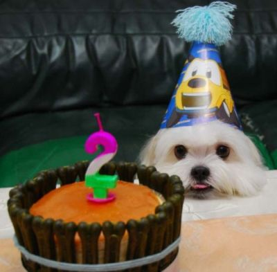 cumpleaños perrito Pastel de cumpleaños para nuestro perro