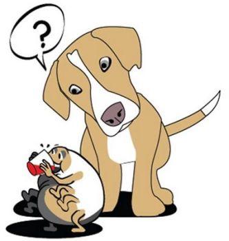 Cómo quitar las garrapatas a las mascotas
