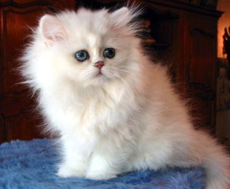 Cuales son las características de los gatos según la edad