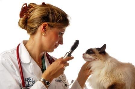 Como se clasifica la diarrea en los gatos