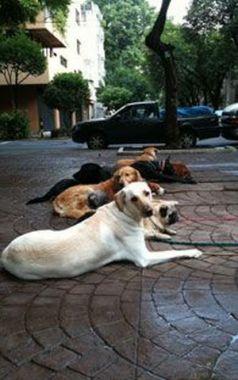 Consejos para pasear a su perro sin correa
