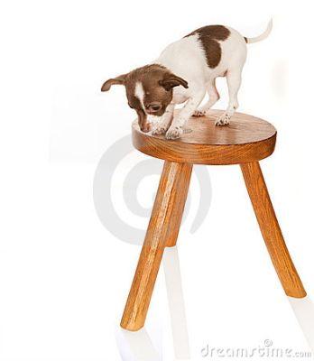 vertigo en perros El vértigo en perros, causas y consejos
