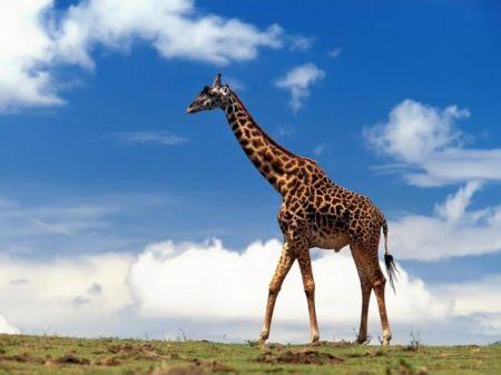 ANIMAL 10 Grandes imágenes de bellos animales