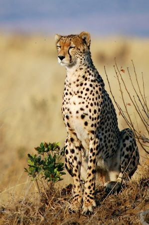 ANIMAL 11 Grandes imágenes de bellos animales