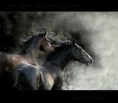 Grandes imágenes de bellos animales