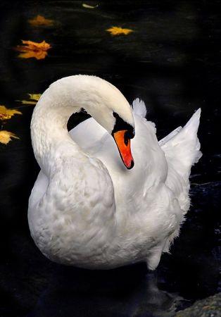 ANIMAL 15 Grandes imágenes de bellos animales