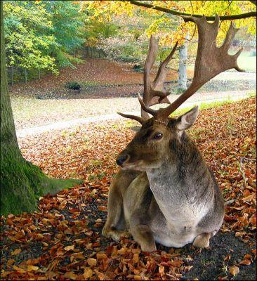 ANIMAL 17 Grandes imágenes de bellos animales