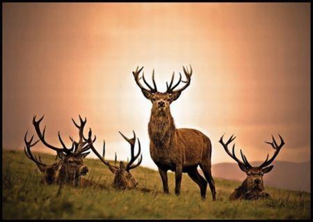 ANIMAL 2 Grandes imágenes de bellos animales