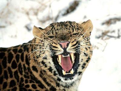 ANIMAL 20 Grandes imágenes de bellos animales