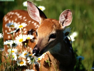ANIMAL 23 Grandes imágenes de bellos animales