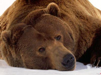 ANIMAL 24 Grandes imágenes de bellos animales