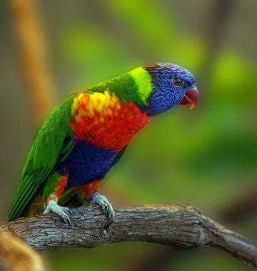 ANIMAL 3 Grandes imágenes de bellos animales