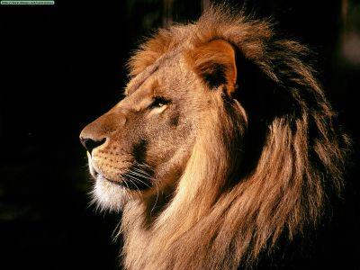 ANIMAL 31 Grandes imágenes de bellos animales