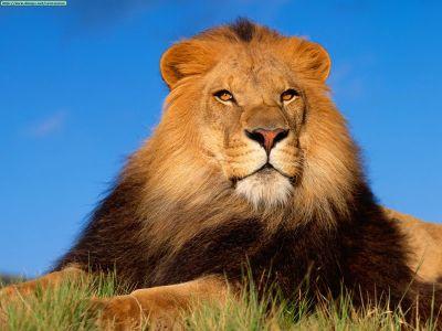 ANIMAL 32 Grandes imágenes de bellos animales