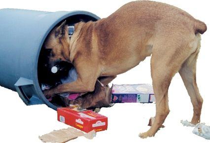 Trastornos en la conducta de los perros