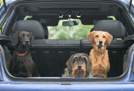 Que hacer para evitar el mareo de nuestro perro dentro del vehiculo