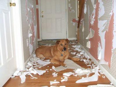 Como preparar al perro para dejarlo solo en casa