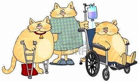Peritonitis infecciosa felina, transmisión, signos clínicos y tratamiento