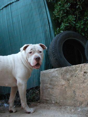 Cristina Delo y su bella perra Lulu