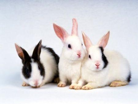 Como tener conejos bien adiestrados