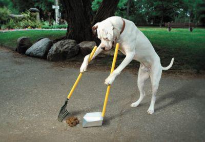 Consejos para entrenar a tu perro a defecar