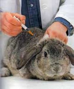 Prevenir enfermedades en conejos por medio de vacunas