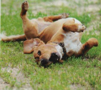 Tratamiento para la ansiedad en los perros Tratamiento para la ansiedad en los perros