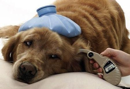 alimentos para perros con cancer