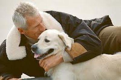 Causas mas frecuentes en la perdida de las mascotas