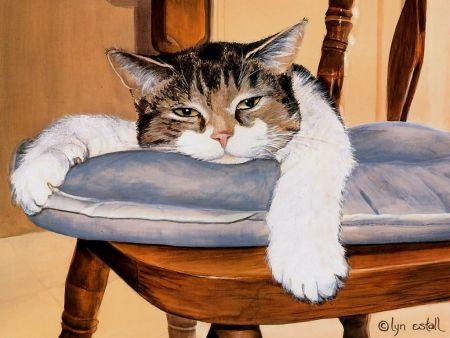 Como tratar la anemia en gatos algunos consejos Como tratar la anemia en gatos, algunos consejos