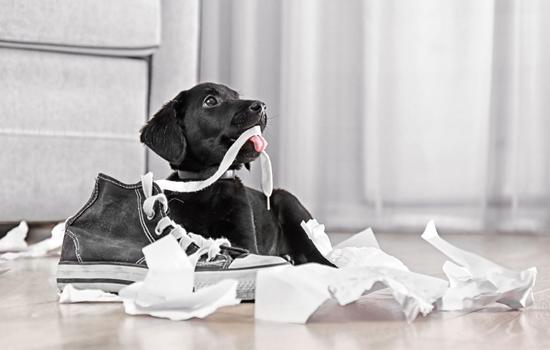 Malas conductas de los perros