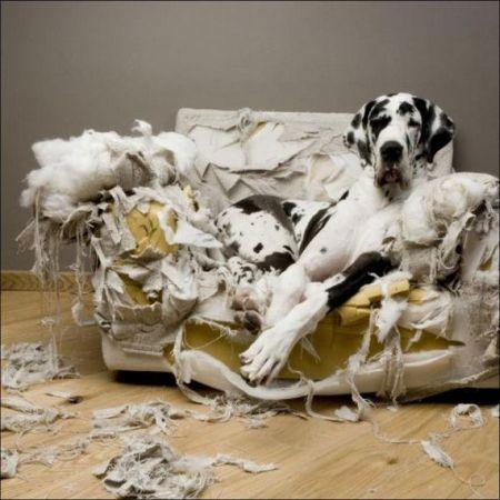 Los perros y su comportamiento destructivo