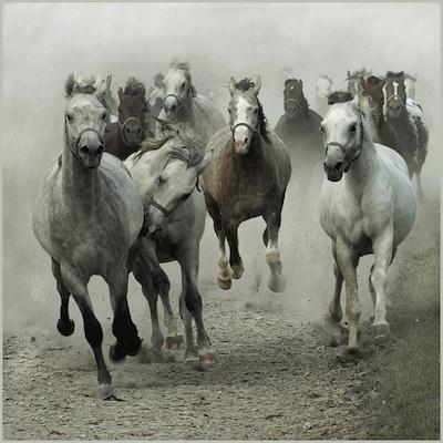 Bellas imágenes de caballos5