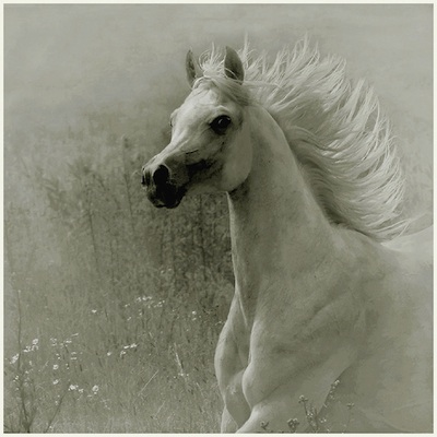 Bellas imágenes de caballos8