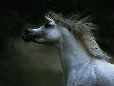 Bellas imagenes de caballos 2