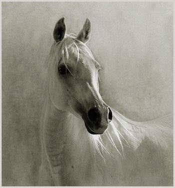 Bellas imagenes de caballos10