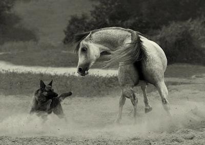 Bellas imagenes de caballos12