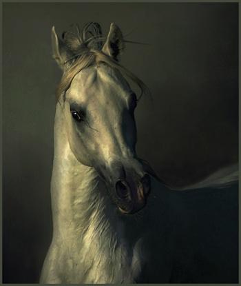 Bellas imagenes de caballos13