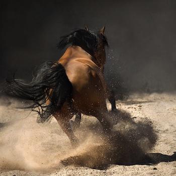 Bellas imagenes de caballos14
