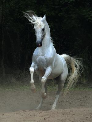 Bellas imagenes de caballos3