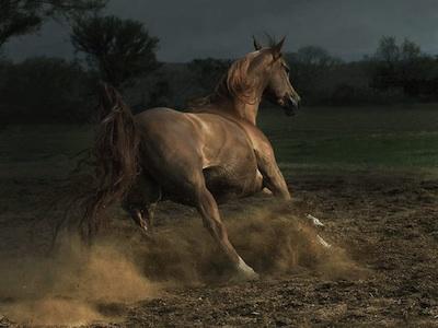 Bellas imagenes de caballos6