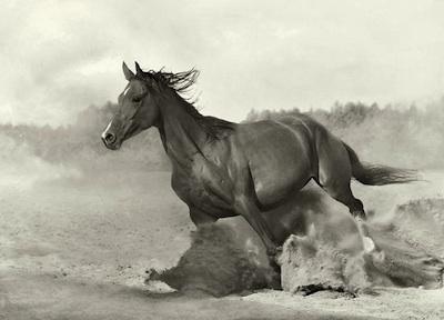Bellas imagenes de caballos7