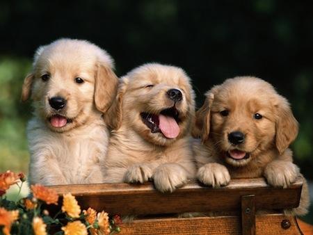 Hierbas medicinales para mascotas