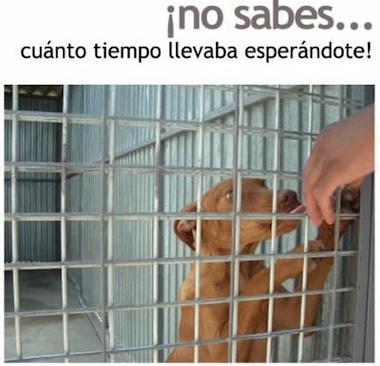 Queremos ser adoptados 4